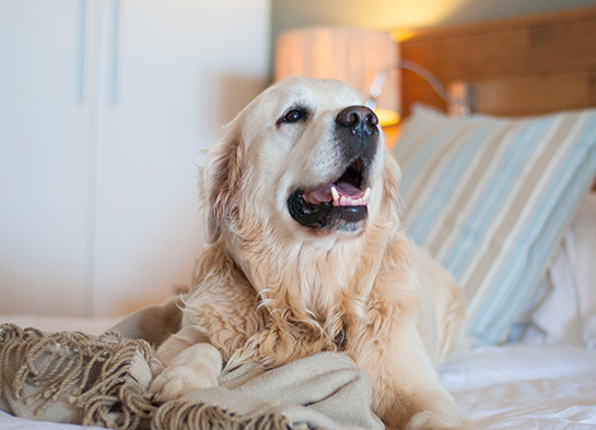 offers-pet-friendly-stays